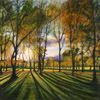 Autumnal burst of light (Meadows)